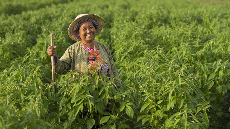 Frau in grünem Erntefeld, Asien
